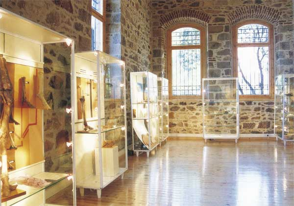 The natural history collection at Vrissa